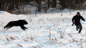 Always run like hell from Bad Bears